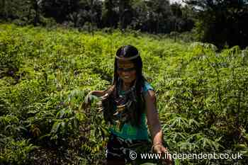 'Of course we eat them!' Brazil's indigenous, larvae-eating TikTok star