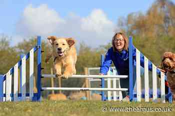 Bruce's doggy day care is coming to Ditchling, East Sussex