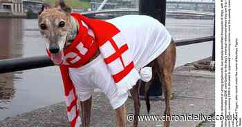 North East racing greyhound owners ordered to ensure dogs get safe homes after retiring