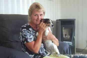 """Ontvoerde hond Femke is weer thuis: """"Week lang gezocht en dolblij met afloop"""""""