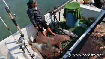 Pescadores de Isla Mujeres denuncian presión para prohibir la pesca de tiburón en México - PorEsto