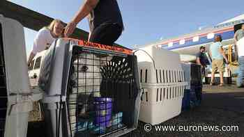 In pictures: Hundreds of animals evacuated from shelters damaged by Hurricane Ida - Euronews