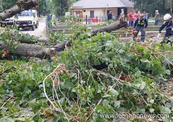 Protezione Civile in azione al Parco Castello di Legnano per un albero caduto - LegnanoNews.it