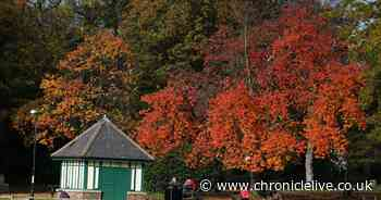 Best places to see autumn leaves in the county named with Newcastle park in the top ten