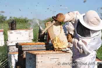 Apicultores de San Rafael y Malargüe denunciaron venta de miel adulterada - La información justa - Diario San Rafael
