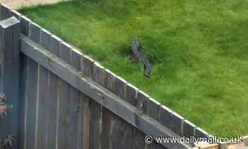 Woman spots a 4ft long 'crocodile' on the loose in her neighbour's garden in Yorkshire