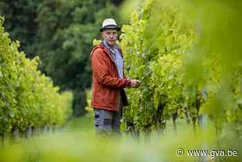 """Kempenaar Guido Verreyt is wijnbouwer in de Voerstreek: """"In Mol kan je geen goede wijn maken"""" - Gazet van Antwerpen"""