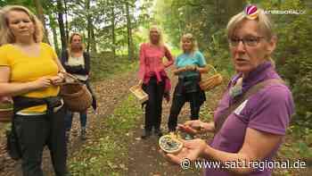 VIDEO   Pilzsaison gestartet: Naturkundlerin bietet Führungen in Bergen an - Sat.1 Regional