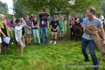 Alexander doopt alpaca's en wordt gedoopt - Het Nieuwsblad