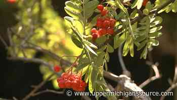 Barrel + Beam's orchard project restores UP flora - UpperMichigansSource.com