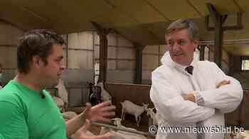 Jan Jambon bezoekt geitenboerderij in Essen