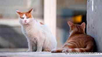 Crece número de gatos abandonados en Xalapa | PalabrasClaras.mx - PalabrasClaras.mx