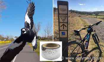 A piece of silver tape is the latest item to help cyclists ward off magpies during breeding season