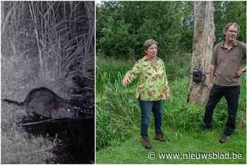 Beverfamilie stoeit in Molse tuin