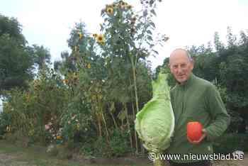"""Biotuinier Paul Boelaert kan zelf bijna niet geloven welke 'recordgroenten' hij uit zijn tuin toverde: """"Ik wil ze nog even bewonderen"""""""