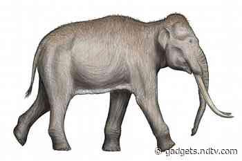 Fossilised Footprints of Extinct Species of Elephants Reveal a Prehistoric Nursery in Spain