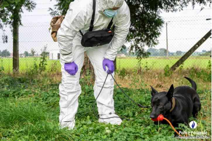 """Eerste zedenhond van federale politie kan sperma lokaliseren: """"Zennah ruikt stalen tot tien dagen na misdrijf"""""""