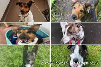 These six dogs with the RSPCA in Lancashire need forever homes