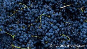 El acelerón de Rioja: 24,5 millones de kilos con más tintas en bodega - NueveCuatroUno