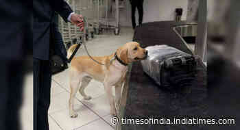 Miami International Airport to use sniffing dogs to detect Coronavirus - Happytrips