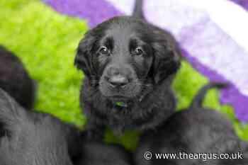 Kennel Club warns against 'dangerous' dog buying habits