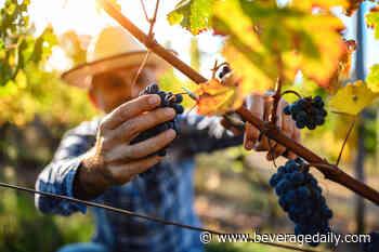 Europe forecasts historically low wine harvest