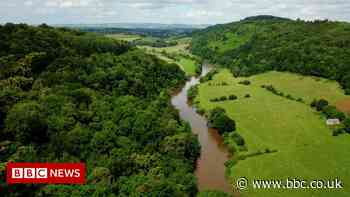 River Wye pollution: Campaigners call on poultry firms to act