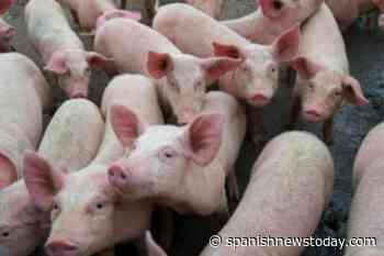 ! Murcia Today - Spain Slaughters 910 Million Animals For Meat Exports - Spanish News Today