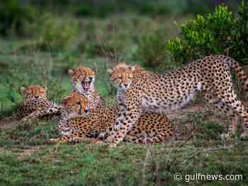 Photos: Dubai-based travel photographer shares pictures of stunning safari animals in Kenya and Tanzania, Africa - Gulf News