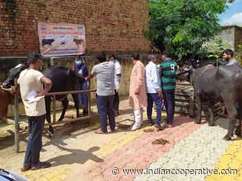 When IFFCO came to the rescue of animals - Indian Cooperative