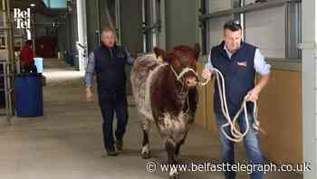 Balmoral Show preview: There is something for everyone as agri-food event returns - Belfast Telegraph