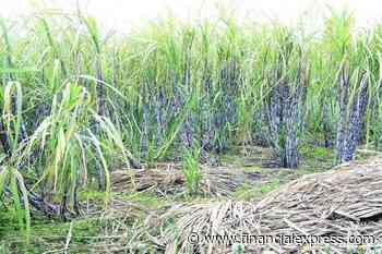 Kharif foodgrain output estimated at record 150.50 MT this year