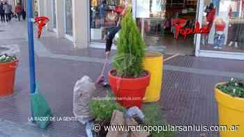 Robaron pinos y plantas en el centro de Villa Mercedes durante el fin de semana - Radio Popular