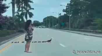 Mujer detiene el tránsito en una carretera para ayudar a cruzar a una familia de patos - La República Perú