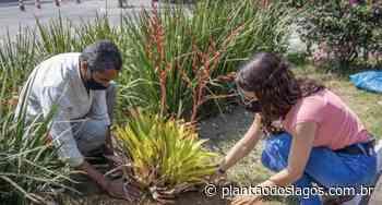 Arraial do Cabo realiza ação em comemoração ao Dia da Árvore - Plantao dos Lagos