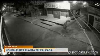 Câmeras de segurança flagram homem furtando plantas em Santa Maria - HORA 7