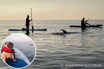 Dolphin spotted by paddleboarders off Brighton beach