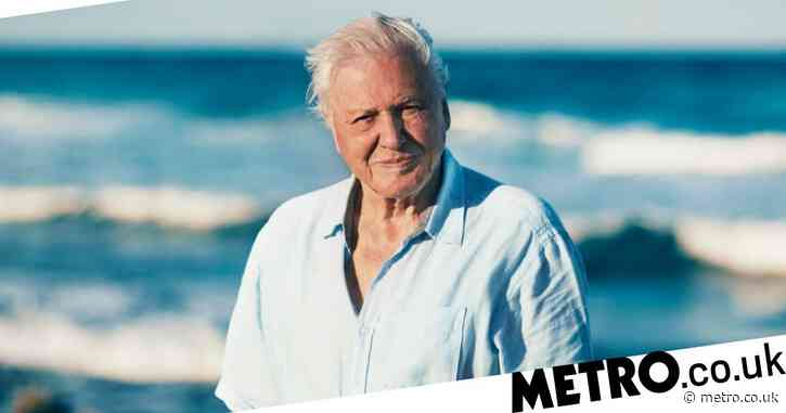 Move over Love Island! Sir David Attenborough to explore the animal dating scene for new BBC series