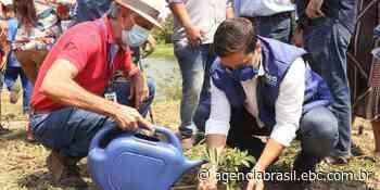 Estado do Rio de Janeiro tem ações em comemoração ao Dia da Árvore - Agência Brasil