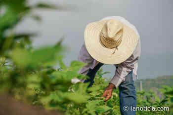 Jueza falla a favor de sindicatos de trabajadores agrícolas en Carolina del Norte - La Noticia - La Noticia