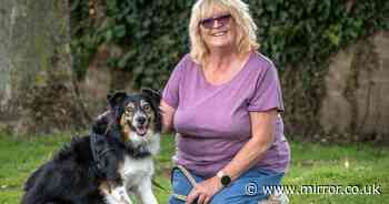 Incredible blind dog who can 'see with sixth sense' is declared a medical mystery