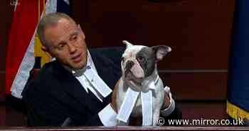 Judge Rinder's French Bulldog passes wind on TV show and leaves audience in hysterics