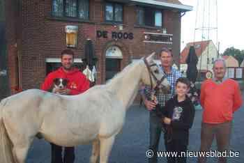 Pony's en Jack Russels gewikt en gewogen