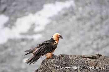 Hochgebirgs-Naturpark Zillertaler Alpen - Zillertaler Zeitung