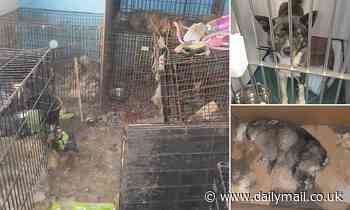 RSPCA find 17 decomposing dogs, cats and rabbits in dog breeder's home