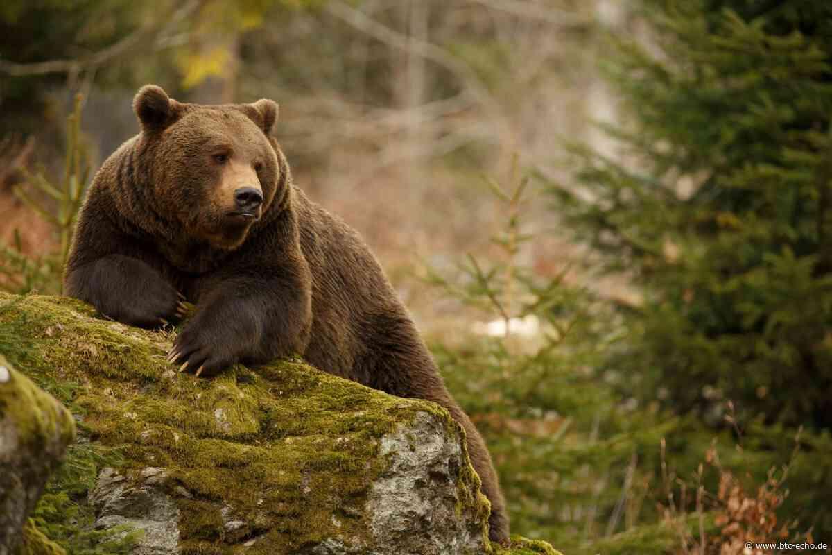 Bitcoin-Kurs: Bären können ersten Teilerfolg für sich verbuchen | BTC-ECHO - BTC-ECHO | Bitcoin & Blockchain Pioneers