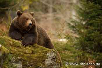 Bitcoin-Kurs: Bären können ersten Teilerfolg für sich verbuchen   BTC-ECHO - BTC-ECHO   Bitcoin & Blockchain Pioneers