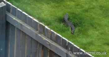 Yorkshire grandad reassures neighbours after 'crocodile' spotted in his back garden