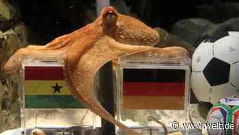 Bundestagswahl: Orakel-Kraken in jedem Wahllokal für Unentschiedene - DIE WELT