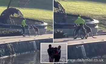 Kangaroo who was rescued from freezing waters in Canberra has been caught attacking a cyclist